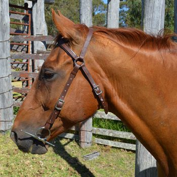 Heavy PVC Bridle, Barcoo, Bridle Head, Full Size