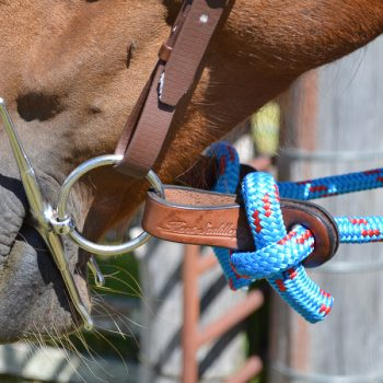 Straps, Dribble, Solid Leather on horse